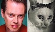 Знакомьтесь, харизматичная кошка Марла, которая так похожа на Стива Бушеми и не только