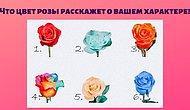 Что цвет выбранной розы расскажет о вашем характере?