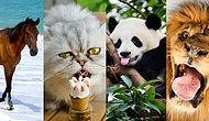 Тест: Узнайте, какое животное – ваш тотем