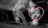 """""""Умереть не встать!"""": 30 фотографий с конкурса National Geographic, которые поразят вас до глубины души"""