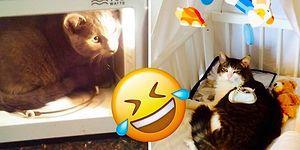 20 упрямых котов, которые все и всегда будут делать по-своему