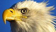 А глаз, как у орла! Этот тест из 9 картинок проверит остроту вашего зрения