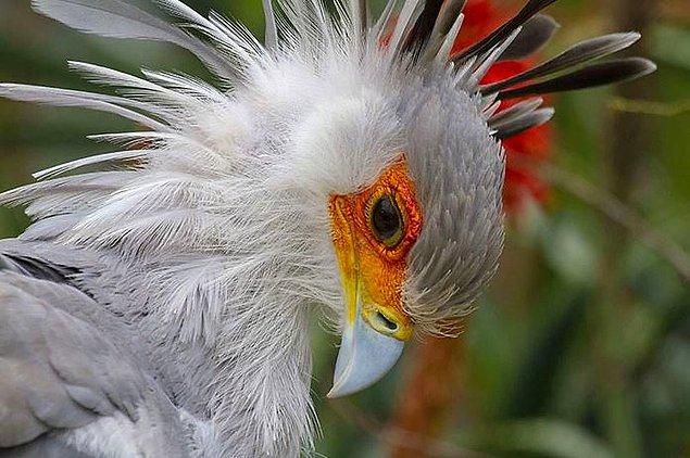 Уникальная красота природы на фотографиях Брайана Коннолли