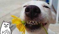 """""""Свирепая"""" Люси и еще 22 очаровательных пса с табличкой """"Осторожно, злая собака"""""""