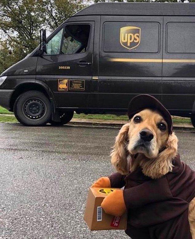 Эти собаки получили профессию и теперь зарабатывают себе на корм сами