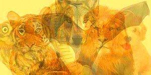 Тест: Какое животное вы увидите тут первым, такой у вас и характер