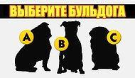 Тест: Вы сможете пройти этот тест хотя бы на 7/10, только если вы обожаете собак