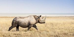 Тест: Что вы знаете об этих редких животных?