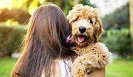 Тест:  Любителям животных, собак и знатокам людей легко будет пройти этот тест
