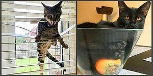 Кто в доме хозяин? Пользователи Сети делятся моментами трудной жизни, которую им устроили коты-деспоты