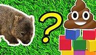 Тест: Как животные «ходят по-большому»? Догадайтесь, какие факты правда, а какие — ложь