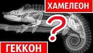 Тест: Вашей эрудиции интуиции нет предела, если отгадаете животных под рентгеном на 14/14