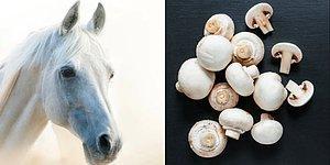 Тест: Достаточно ли вы чисты сердцем, чтобы определить, изображена на картинке еда или лошадь?
