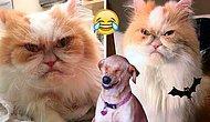 Котик Луи выглядит так, как будто пришел забрать вашу душу