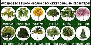 Тест: Что расскажет дерево вашего месяца рождения?