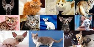 Тест: Выберите кота, а мы угадаем ваш знак зодиака (бонус: прогноз на ближайшее время)