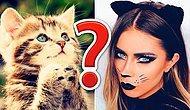 Тест: Создайте себе котика мечты, а мы попробуем угадать, как вы выглядите
