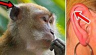 9 органов человеческого тела, которые эволюция давно должна была отправить на помойку