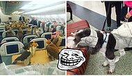 Маразм крепчает: Забавные фото, снятые в аэропортах, которые сделают ваш день