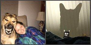 Девушка выложила неудачное фото своей собаки в Сети, и другие пользователи решили последовать ее примеру. А удачные ли фото, смотрите сами