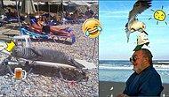 Все на море! 20 веселых фото с пляжа, которые напомнят о приближении отпуска
