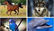 Тест: Выбрав животное, вы узнаете все о своем характере