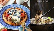 Новые оригинальные фото питерского художника, совмещающие котиков и еду