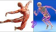 Тест: Вы отлично знаете собственное тело, если сможете верно ответить на 12 вопросов по биологии человека