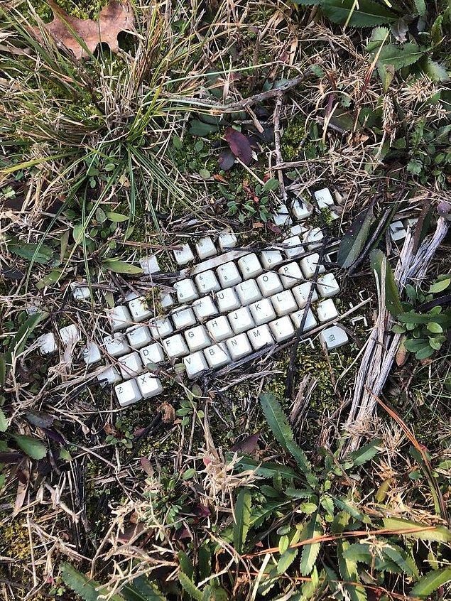 Как это там оказалось? Странные вещи, найденные в лесу