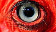 В мире животных: Вы настоящий зоолог, если узнаете все 10 зверушек по глазам