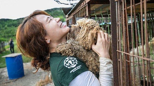 1. Hayvan hakları savunucuları, Güney Kore'de yenmek için yetiştirilen 50 köpeği çiftlikten kurtarmayı başardı.