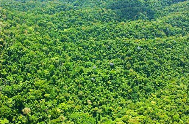 Larsen, bölgedeki vahşi yaşamın çeşitliliğinin korunması için yüksek önceliğe sahip olduğunu vurguladı.