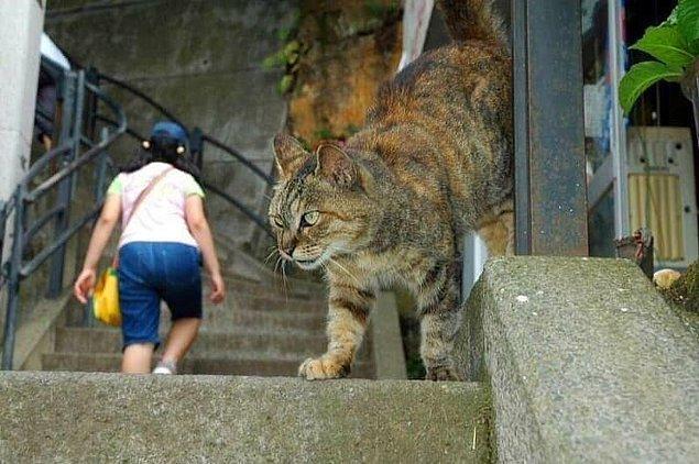 13. Bu normal boyutlarda bir kedinin fotoğrafı.
