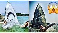 Художник превратил гигантский пляжный камень в большую белую акулу. Он сразу стал местной достопримечательностью