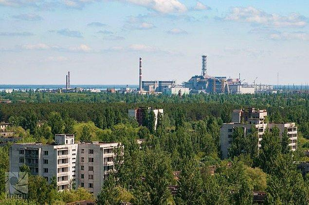 30 фотографий природы, выигравшей битву с радиацией в зоне отчуждения вокруг Чернобыля