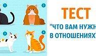 Тест: Выберите одну из четырёх кошек и узнайте, какой партнёр сможет сделать вам счастливым