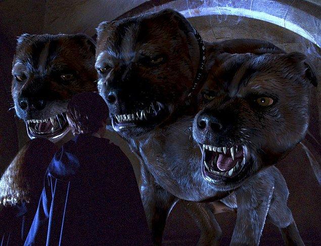 1. Serinin ilk filmi olan Felsefe Taşı'nda mitolojide Cerberus olarak bildiğimiz üç başlı köpek, Fluffy adıyla karşımıza çıkıyor. Hades'in bekçisi olan Cerberus gibi Fluffy de felsefe taşının bekçisidir.