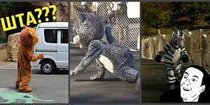 Спасательные учения в Токийском зоопарке, которые столь нелепы, что даже животные не скрывают своей реакции