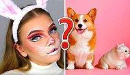 Тест: Каким домашним животным вы были в прошлой жизни?
