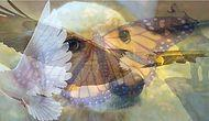 Тест: То животное, которое вы увидели первым, является точным отражением вашего характера