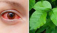Тест: В этой подборке 8 страшно ядовитых растений и одно безвредное. Сможете его найти?