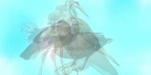 Тест: Птица, которую вы увидели первой, поведает о вашей исключительной черте характера