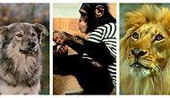 Тест: Вы по-настоящему внимательный зритель, если сможете вспомнить, в каких русских фильмах видели этих животных