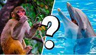 Тест: Какое животное обычно ассоциируют с вашей личностью?
