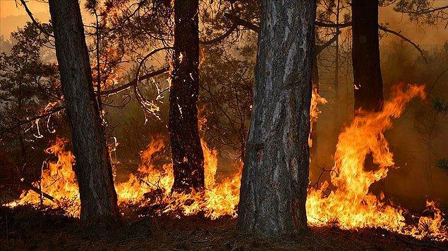 Seyitgazi'ye bağlı Yapıldak ve Gökçegüney köyleri arasında kalan karaçam ormanında, dün saat 17.00 sıralarında yangın çıktı.