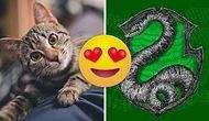 Тест: Выберите милых животных, а мы определим вас в один из факультетов Хогвартса