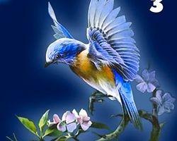 Эта птица дарит вам веру в себя
