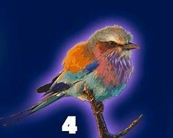 Эта птица дарит вам удачу