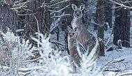 Глобальное потепление? Скажите это австралийским кенгуру, которые скачут по снегам