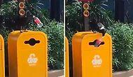 Смышленая птица, которая преподала урок многим людям, сложив мусор в урну